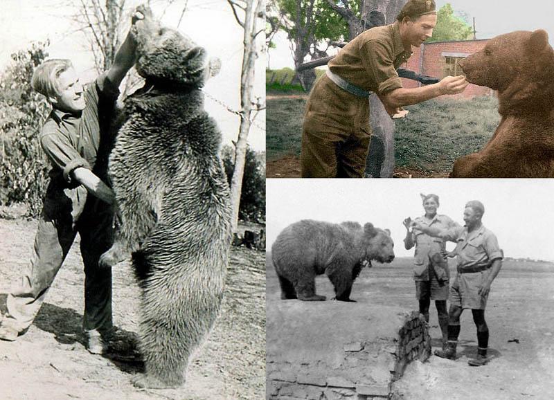 История медведя, который воевал во Второй мировой войне