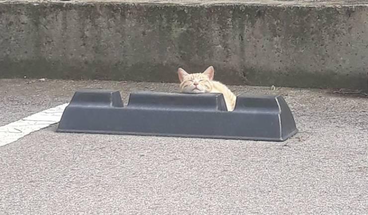 Котикам нравится лежать на парковочных барьерах