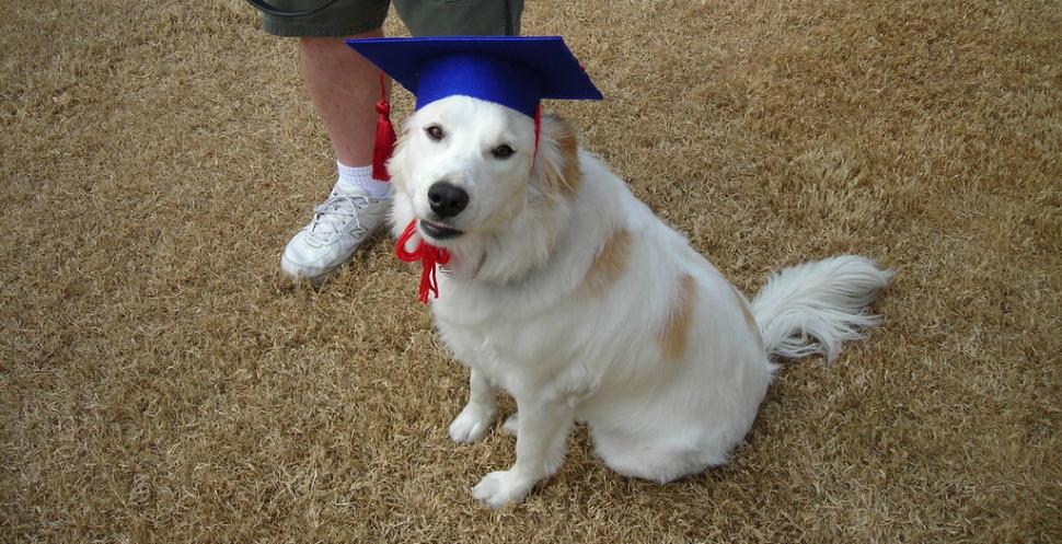 Животные с высшим образованием, которые получили диплом