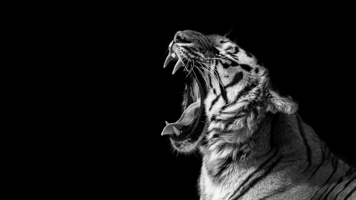 Портреты животных на черном или белом фоне от Джорджа Уилхауса