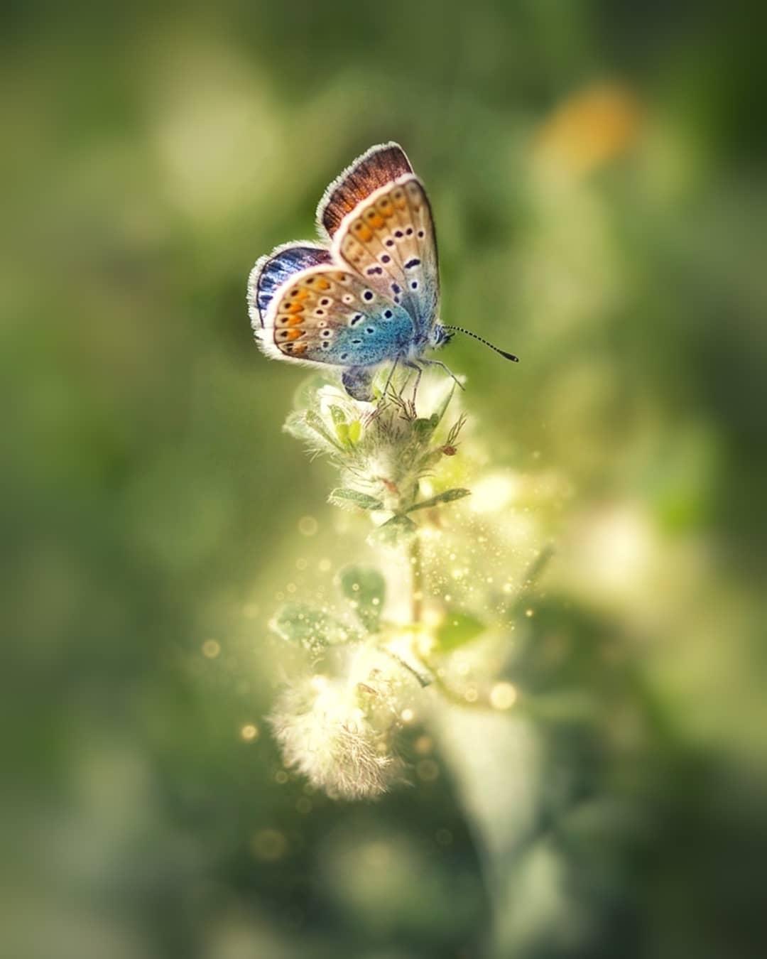 Эффектные снимки цветов и насекомых от Ани Стребер