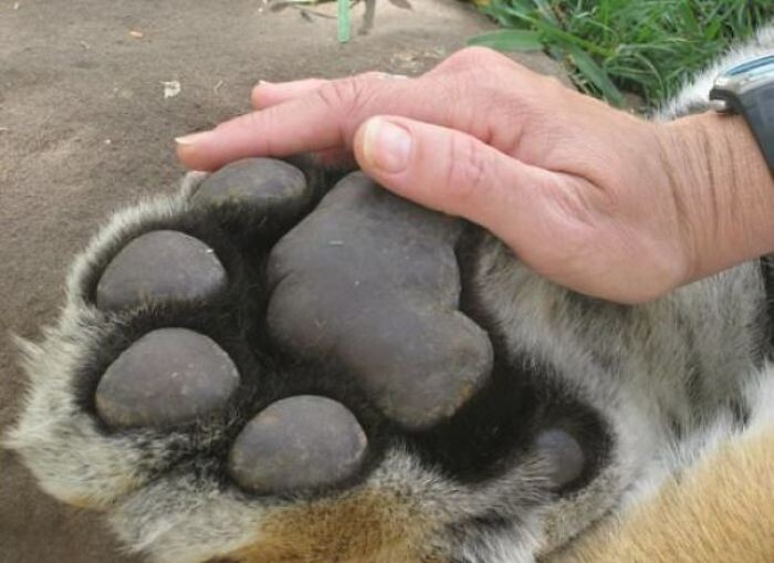Реальные размеры некоторых животных вас поразят