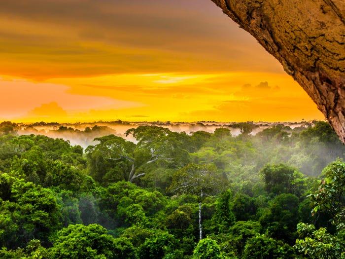 Уникальная красота в совершенно разных лесах мира