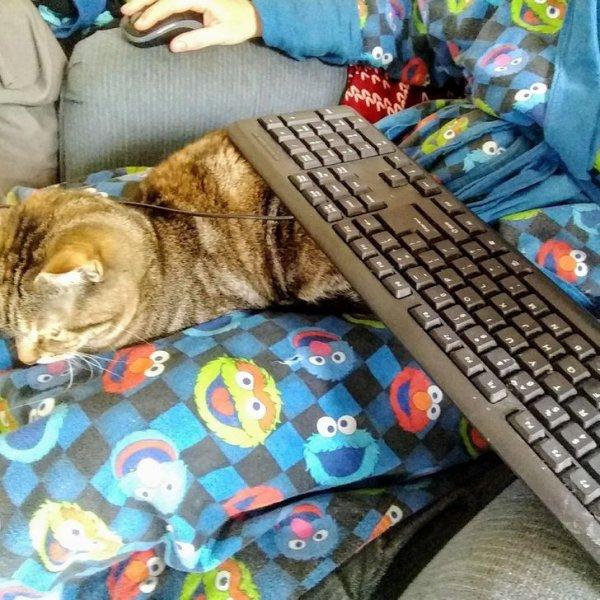 Забавные котики, которые помогают своим хозяевам