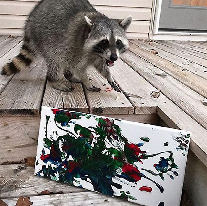 Еноты-художники, которые пишут картины и покорили социальные сети