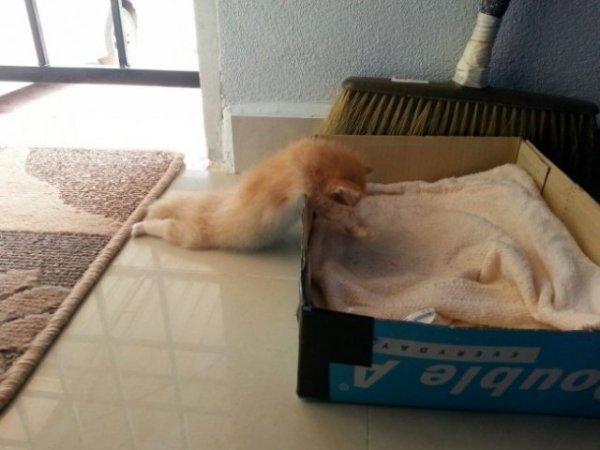 Коты, которые очень устали и крепко спят