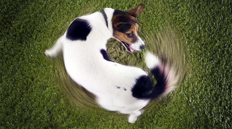Некоторые любопытные факты о собаках