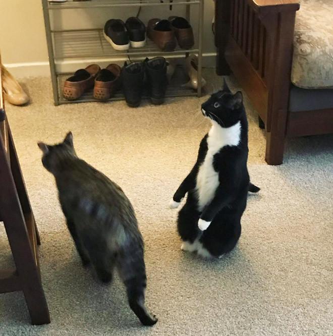 Некоторые котики думают, что они пингвины