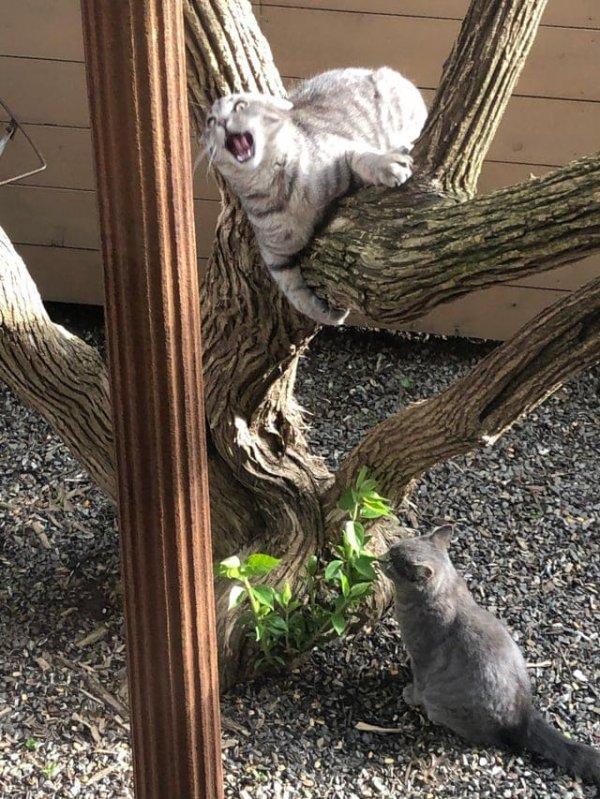 Максимально артистичные и немного сумасшедшие коты
