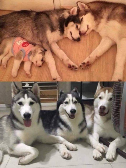 Малыши животных так похожи на родителей
