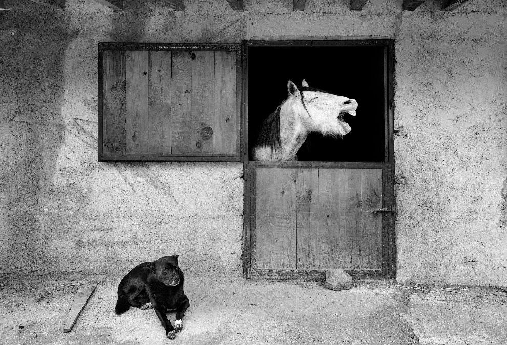 Забавные животные с фотоконкурса Comedy Pet Photo Awards 2020