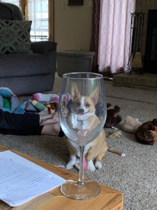А что, если посмотреть на животных через стеклянные предметы