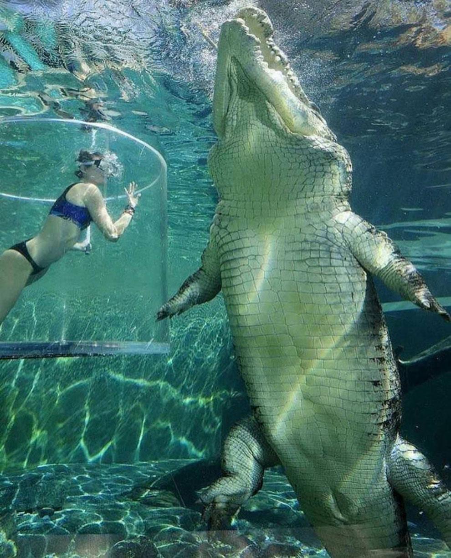 Большие животные рядом c людьми