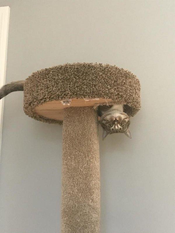 Котики, над которыми не властны физические законы Животные