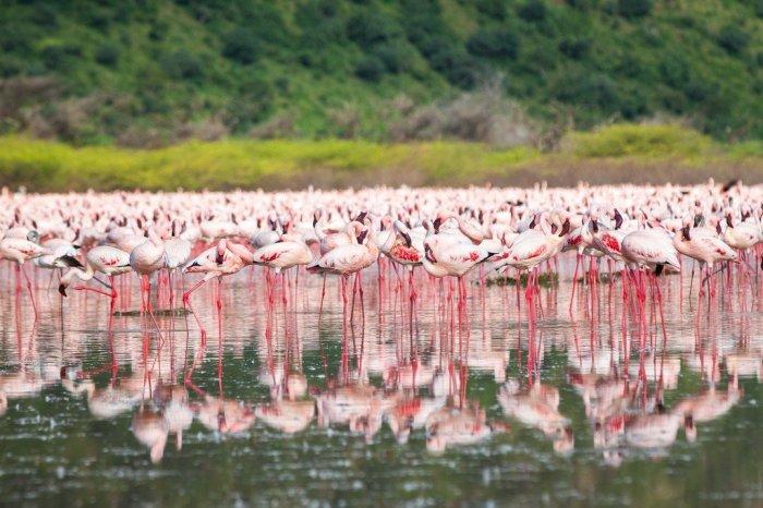 Озеро Богория, где можно увидеть около двух миллионов фламинго