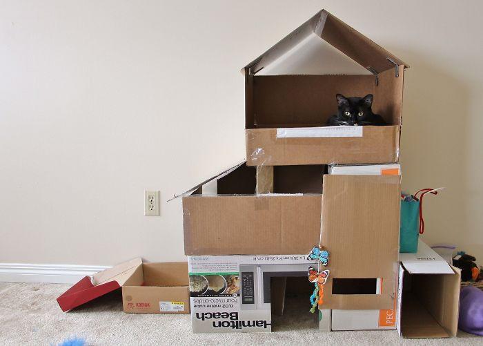 Хозяева котиков построили для них картонные замки и крепости