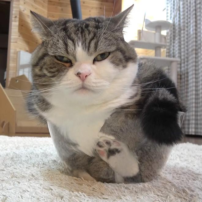 Новые доказательства того, что котики — это жидкость