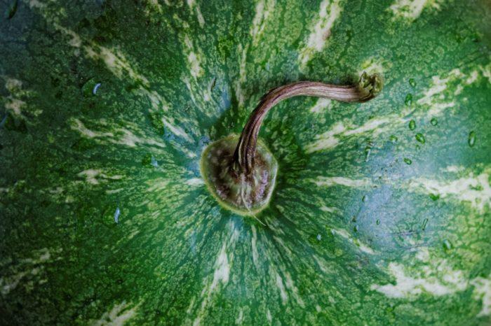 Секреты выбора хорошего арбуза от опытного фермера