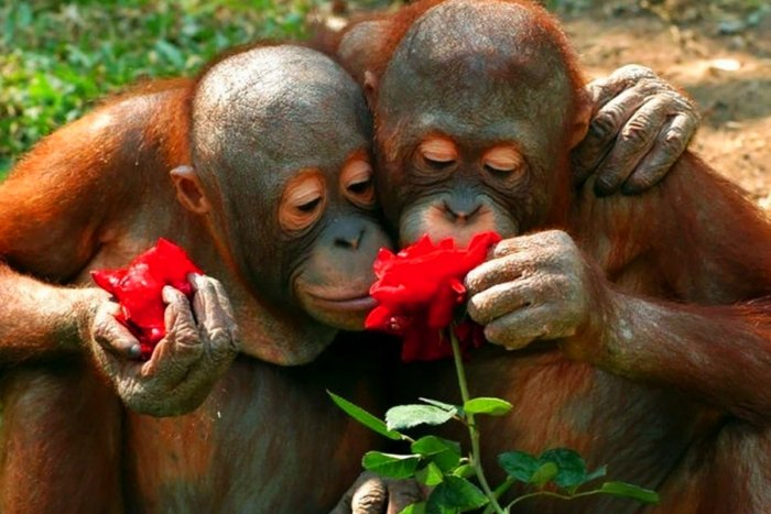 Зачем существует любовь с точки зрения эволюции