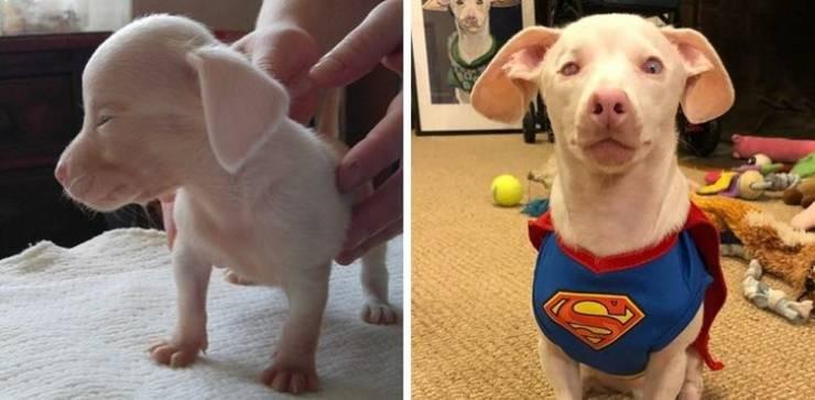 Животные на снимках до и после того, как их спасли от бездомной жизни