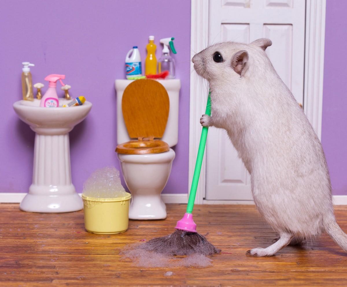 Забавные снимки песчанок, которые занимаются домашними делами