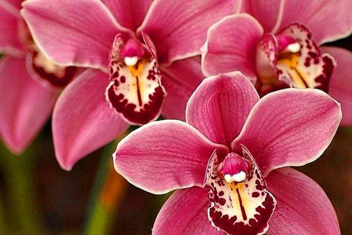 Почему орхидеи запрещено держать дома