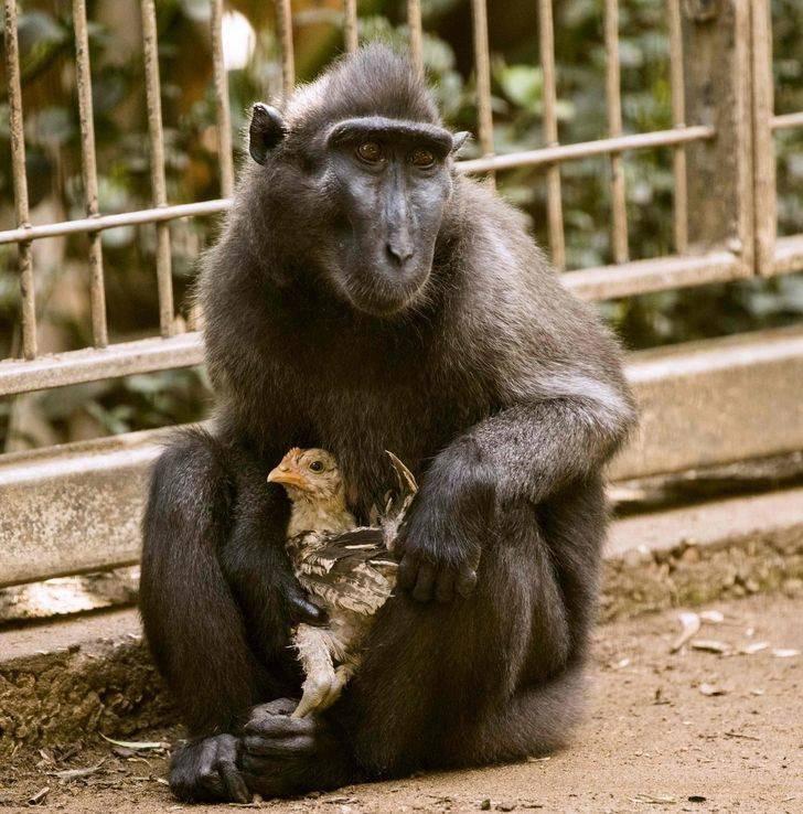 Животные разных видов дружат между собой
