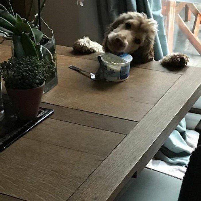 Домашние животные, рядом с которыми нельзя оставлять еду