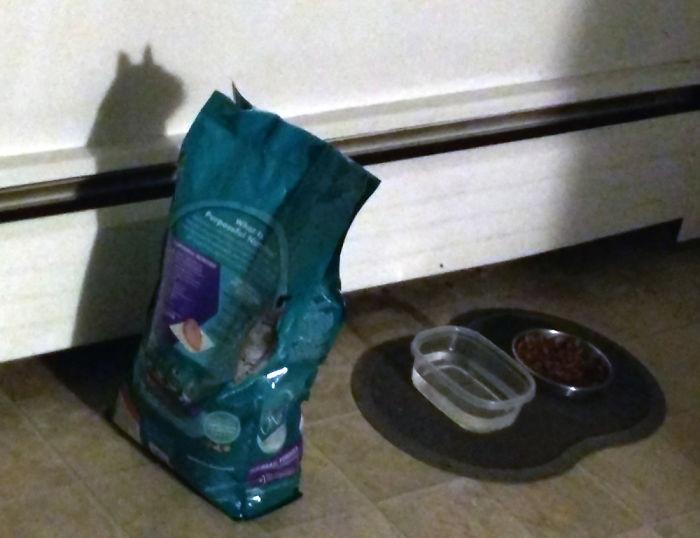 Когда котики мерещатся в самых неожиданных вещах и местах