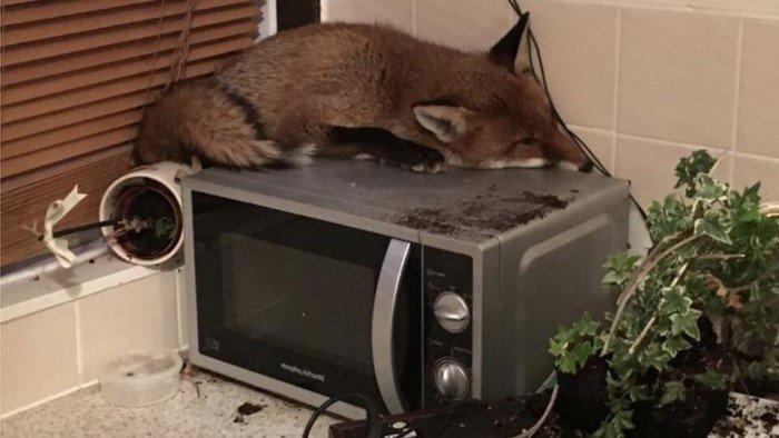 Когда встретил лису там, где никто не ожидал