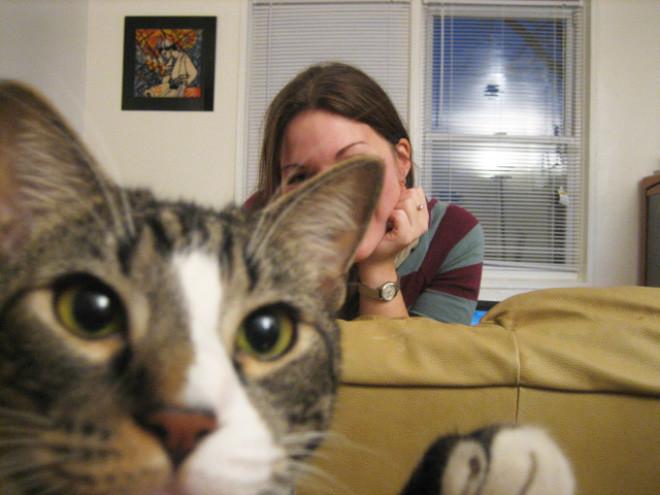 Котики - настоящие мастера фотобомбинга