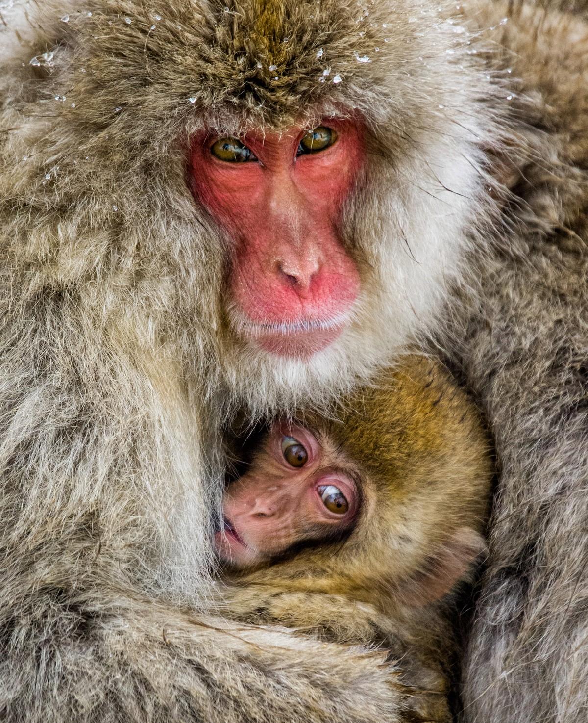 Андрей Гудков делает снимки диких животных в естественной среде обитания