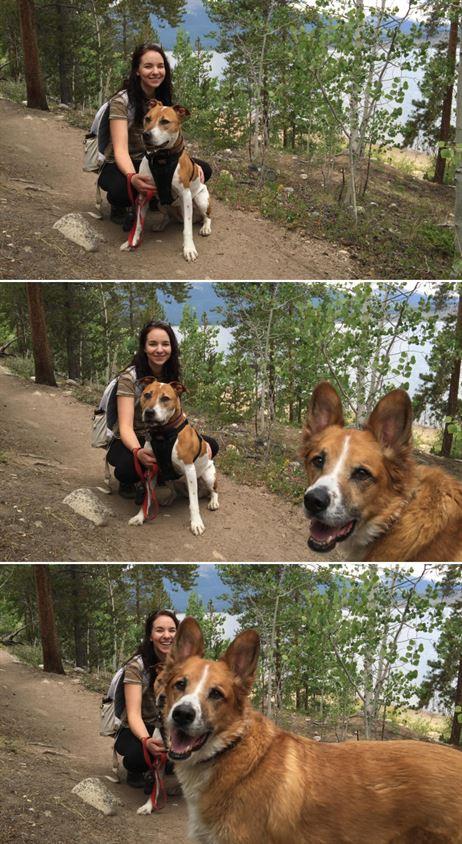 Собаки — те ещё мастера фотобомбинга