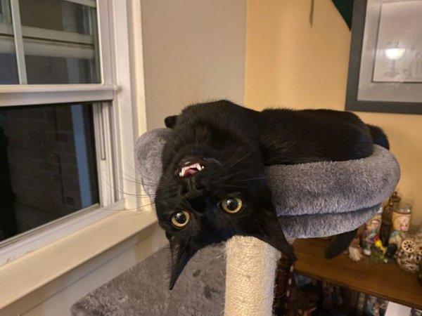 Забавные коты, у которых сбились заводские настройки