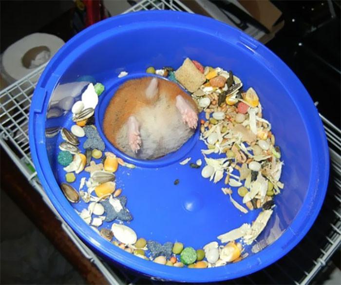 Животные так проголодались, что застряли во время еды