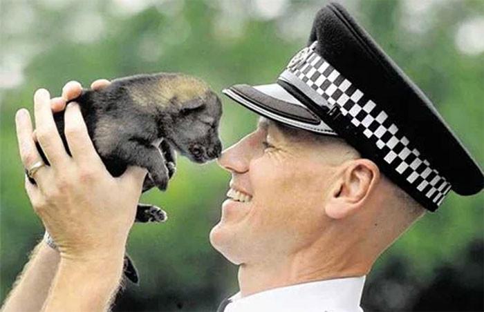 Будущие служебные собаки, которые пока ещё малыши