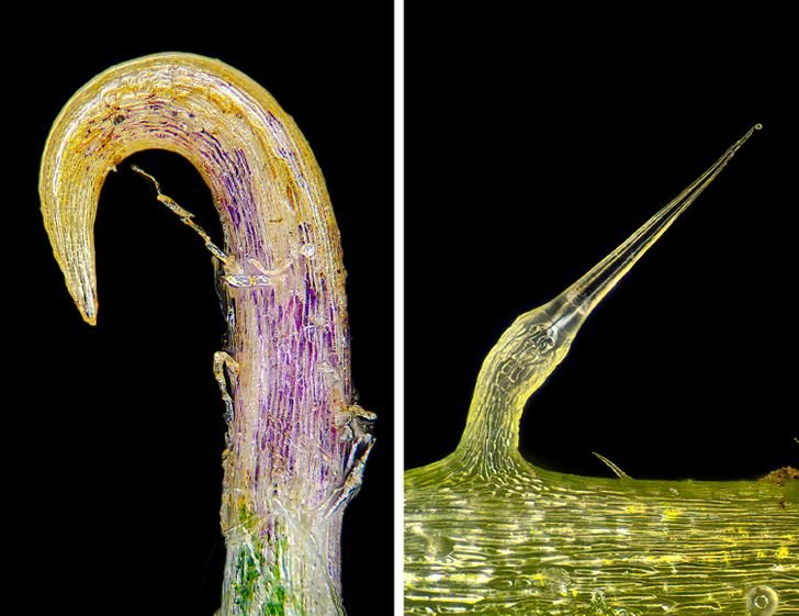 Снимки из микромира показывают другую сторону обычных вещей