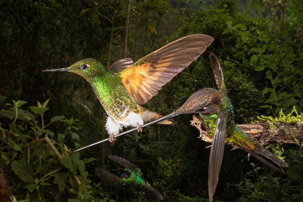 Победители фотоконкурса Bird Photographer of the Year 2020