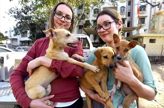 Про отношение к домашним животным в разных странах