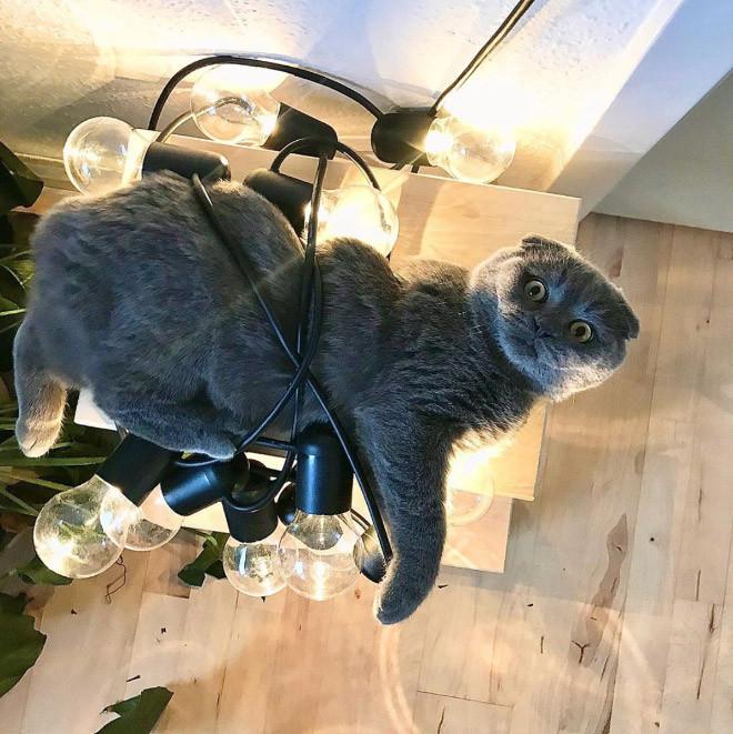 Котики, которые попали в неловкое положение