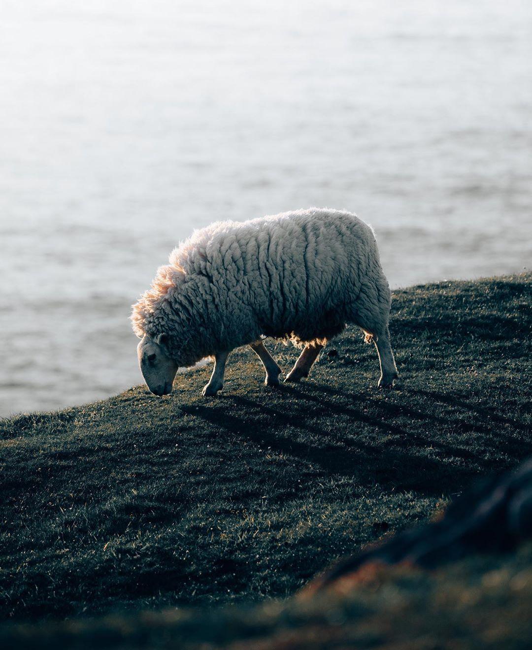 Пейзажи, животные и архитектура на снимках Филиппа Пилца