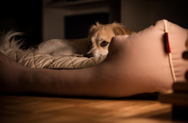 Причины бессонницы и плохого сна домашних животных