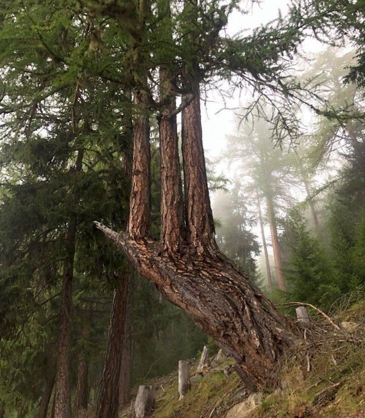 Природа берёт своё обратно на снимках