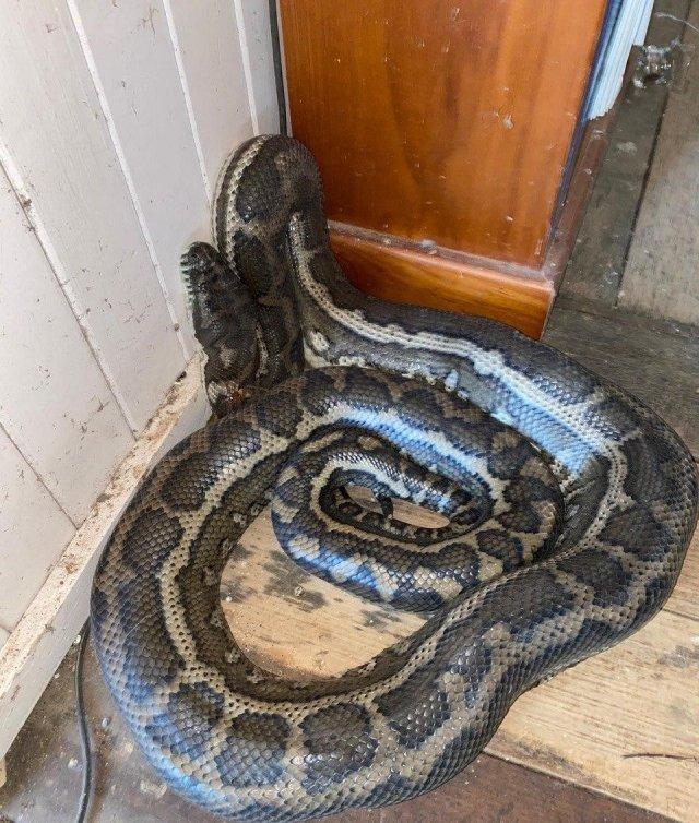 Дэвид Тейт вернулся из отпуска и нашел в доме необычных гостей