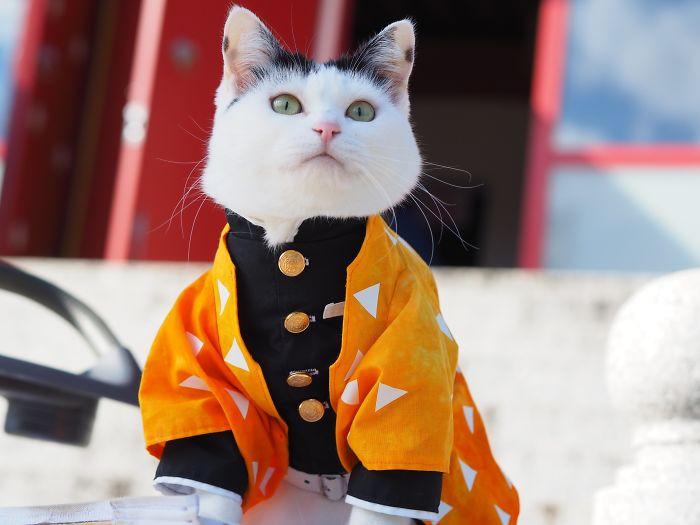 Японский художник создаёт костюмы в стиле аниме для своих кошек