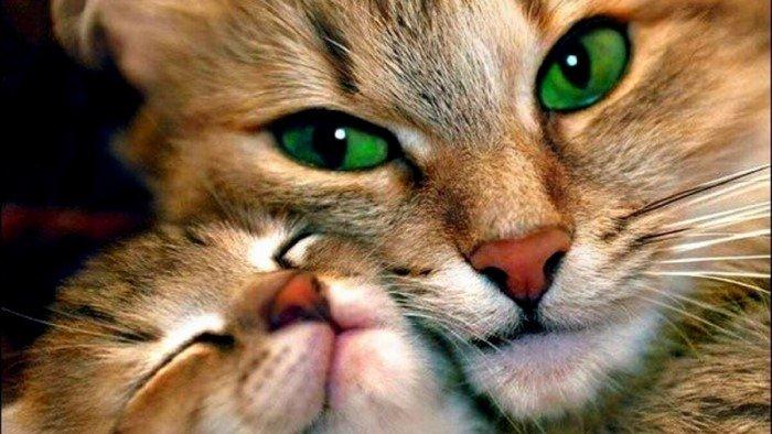 Каким собаки и кошки видят на мир