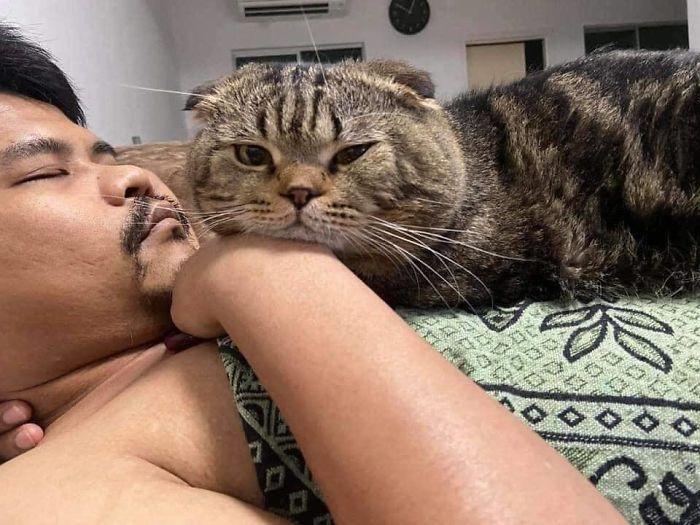 Женщина документирует, как кот просто украл у неё мужа