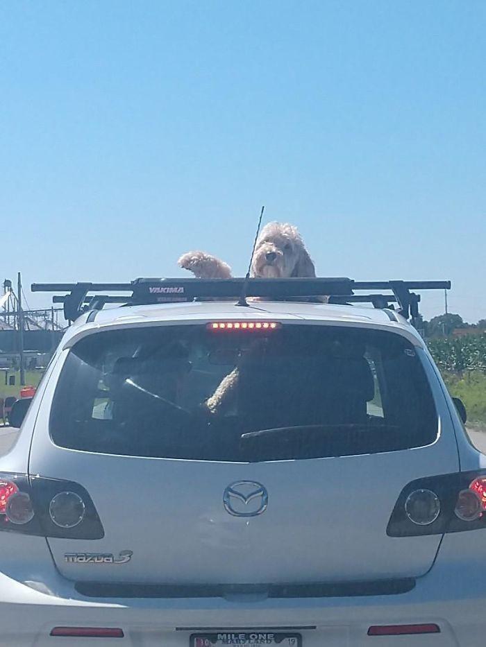 Как ведут себя в машине разные пёсики