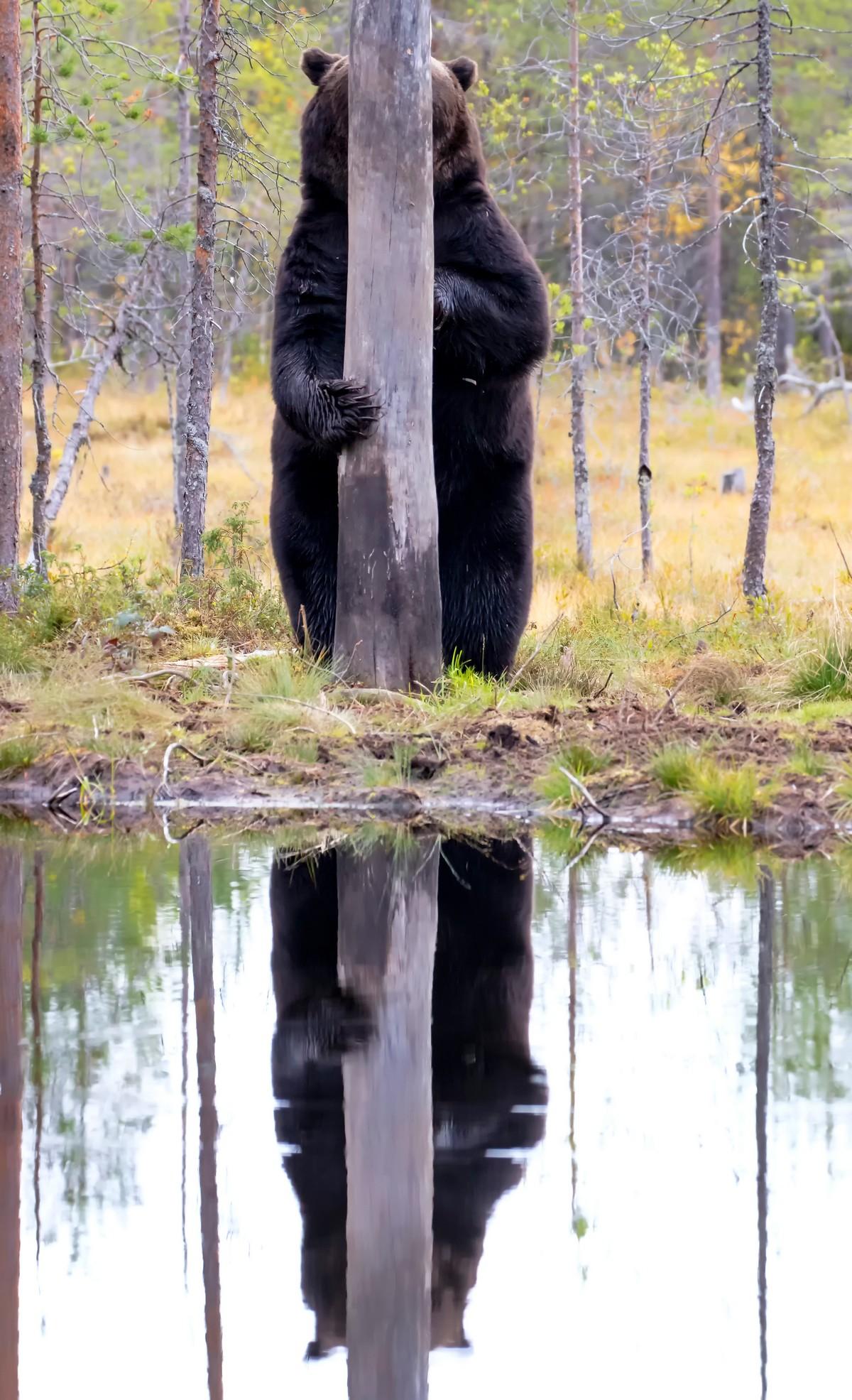 Финалисты смешного фотоконкурса The Comedy Wildlife Photography Awards 2020