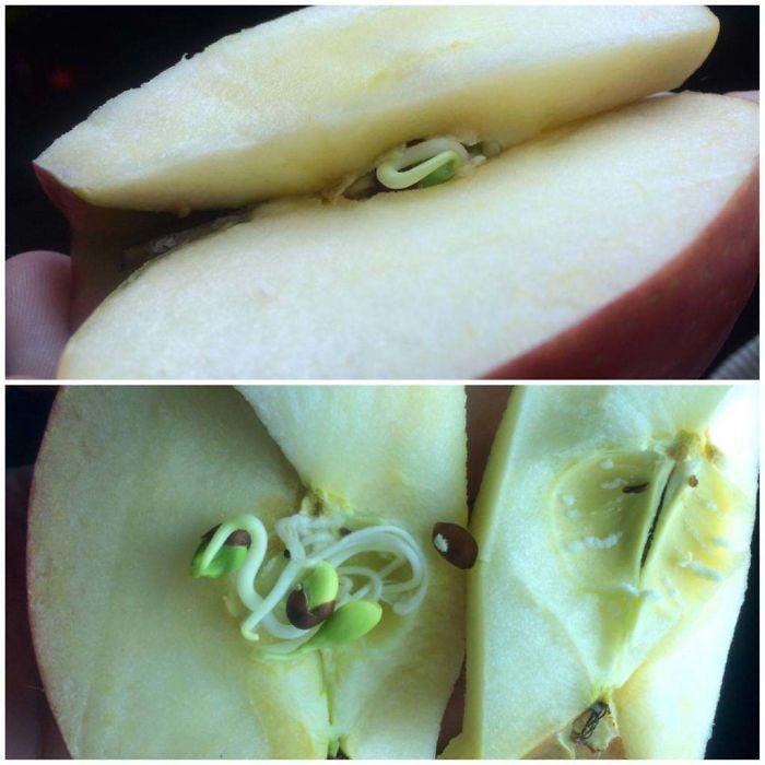 Фрукты и овощи, которые ужасно и завораживающе проросли изнутри